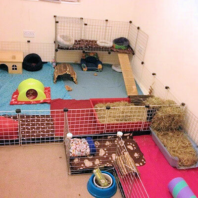 Housing your guinea pig