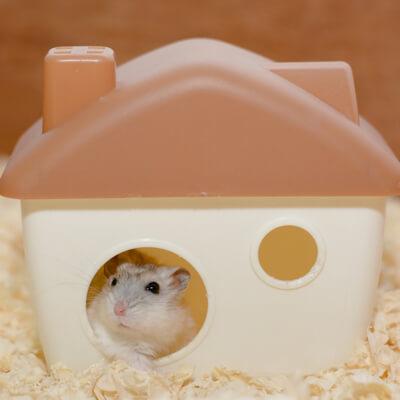 Hamsters: Housing